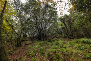 forest, Nahal Snir nature reserve,Israel