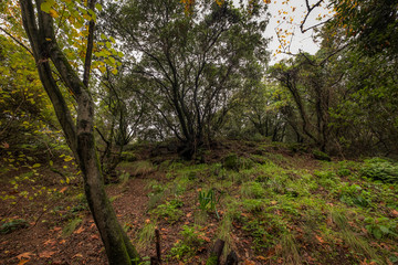 path in the forest,  Nahal Snir nature reserve,Israel