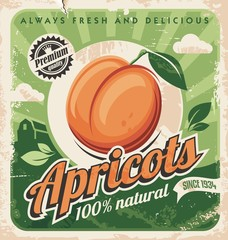 Apricots vintage poster design. Organic and natural farm fruits retro sign. Juicy apricot on green background. Vector image.