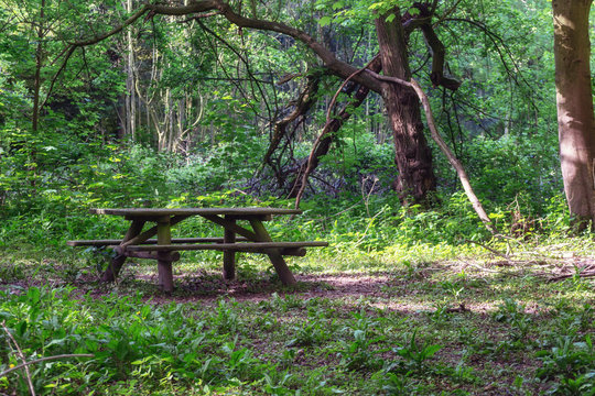 Place to rest and eat in the forest of the estate Marienwaerdt