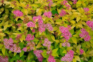 Search Photos Gartenstrauch