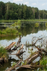 Photo sur Toile Rivière de la forêt backwater in the middle of forest