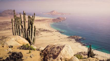 Coast of Pan de Azucar National Park in Chile. Atacama desert coast and cactus Wall mural
