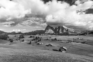 Alpe di Siusi - Seiser Alm with Sassolungo - Langkofel mountain group in background at sunset. Flowers and wooden chalets in Dolomites, Trentino Alto Adige, South Tyrol, Italy, Europe
