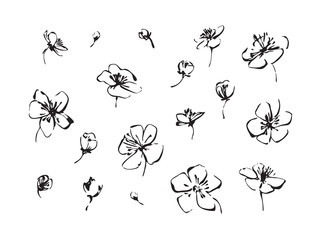 Set of hand drawn brush paint cherry blossoms. Sakura outline flowers painting by ink. Black isolated vector on white background