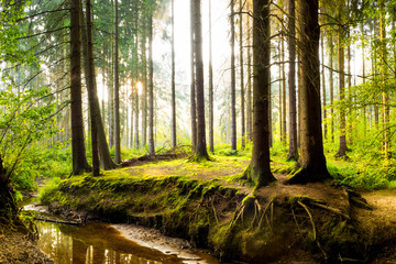 Wall Mural - Beautiful forest in spring with bright sunlight shining through the trees