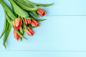 Bouquet of red tulips on a blue painted wooden background, flat lay with space for text