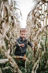 Cute boy walking amidst crops on field