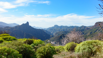 Spring time in the mountains of Canary Islands, Spain