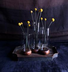 Yellow Craspedia in Three Vases