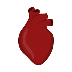 Isolated human heart image. Vector illustration design
