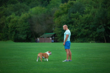 Handsome young man with english bulldog dog outdoors in city park forest. Man on a green grass with dog. Cynologist