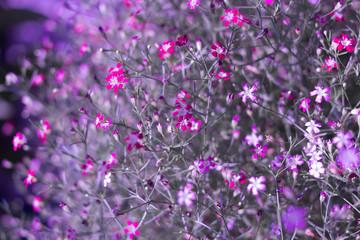 Yipso flower stock photo.