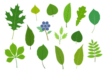 Green leaf illustration material set