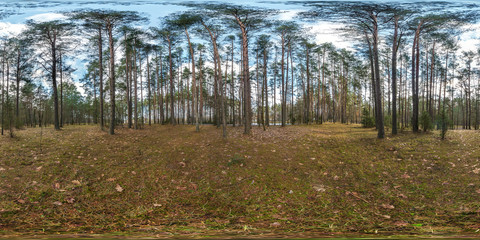 full spherical hdri panorama 360 degrees angle view on pedestrian footpath and bicycle lane path in pinery forest in equirectangular projection. VR AR content