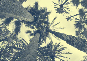 Coconut palm tree on the sky background, trendy duotone and halftone effect, 90's style Wall mural