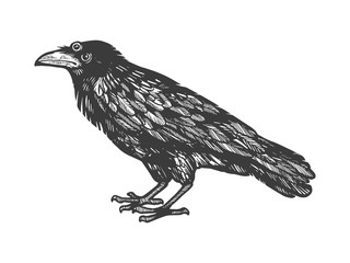 Crow with three eyes sketch engraving vector illustration. Scratch board style imitation. Hand drawn image.