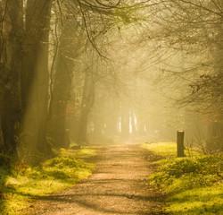 Fotobehang Bossen Sunrise on the path
