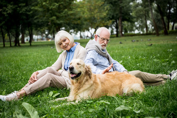happy senior couple with adorable golden retriever dog sitting on green lawn