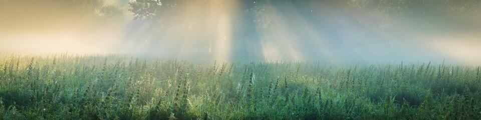 Sonnenaufgang auf einem Feld mit Baum im Nebel
