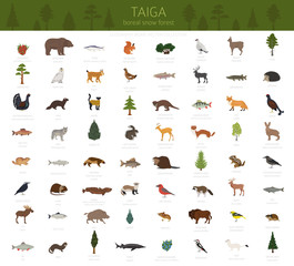 Taiga biome, boreal snow forest. Terrestrial ecosystem world map. Animals, birds, fish and plants infographic design