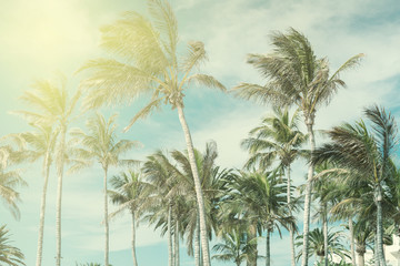Toned photos of the palm trees, light green blue yellow, selective focus