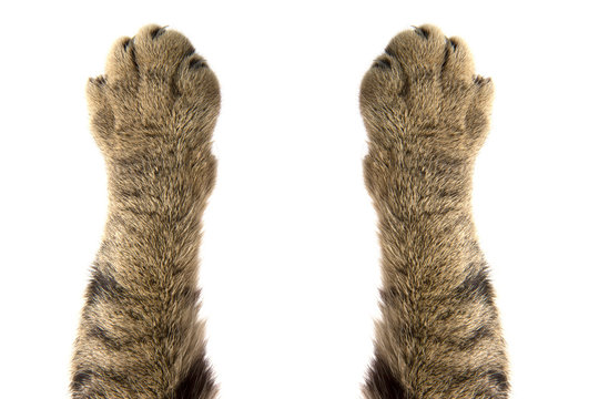 cat paws on white background