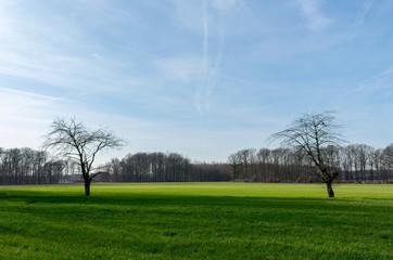 zwei alleinstehende, kahle Bäume auf weiter, grüner Wiese. Standort: Deutschland, Nordrhein-Westfalen