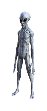 Illustration of an gray alien being on a white background