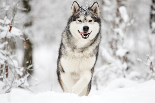 dog on a winter walk in the snow