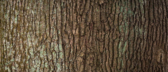 Embossed texture of the brown bark of a tree with green moss and lichen on it. Expanded circular panorama of the bark of an oak. Fototapete