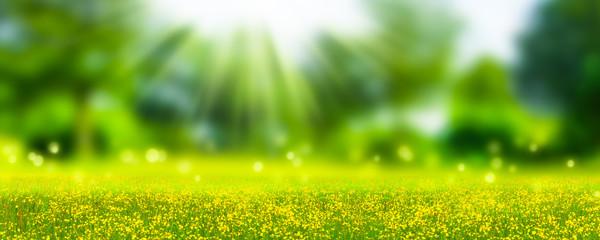 idyllische natur in der sonne, hintergrund