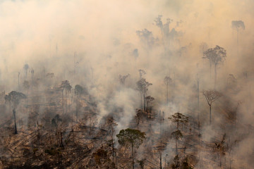 The Wider Image: Battling deforestation in the Amazon