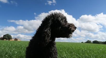 dog on green grass