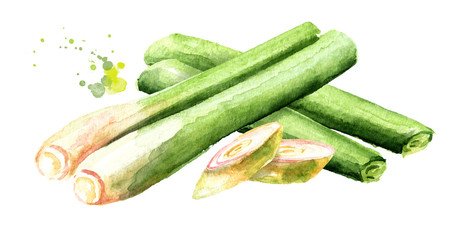Fresh lemongrass plant wirh slices. Watercolor hand drawn illustration, isolated on white background