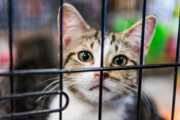 Portrait of one tabby calico kitten in cage waiting for adoption