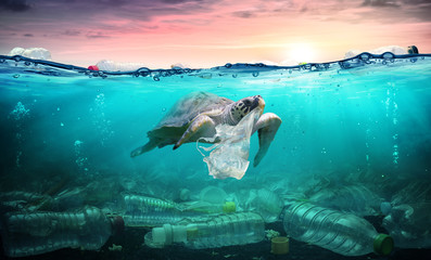 Foto op Plexiglas Schildpad Plastic Pollution In Ocean - Turtle Eat Plastic Bag - Environmental Problem