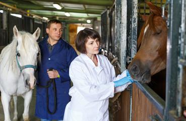Female veterinarian examining horse
