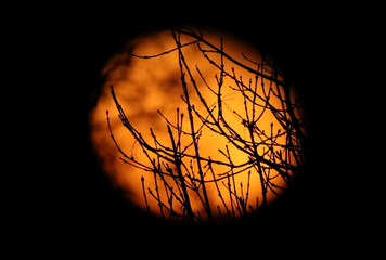 Tree branches are seen in front of a Waning Gibbous moon, Harpenden