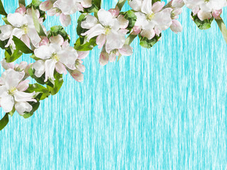 Beautiful floral background of Apple flowers. Isolated