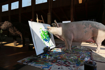 Pigcasso, a rescued pig, paints on a canvas at the Farm Sanctuary in Franschhoek