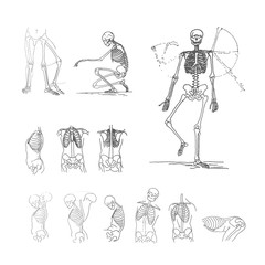 Vector illustration concept of skeleton. Black on white background