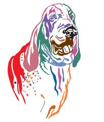 Colorful decorative portrait of Dog Bracco Italiano vector illustration