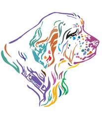 Colorful decorative portrait of Dog Clumber Spaniel vector illustration