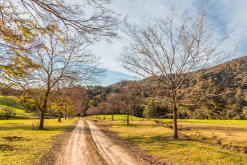 Dirt road in the Upper Hunter Valley, NSW, Australia, in the evening light.