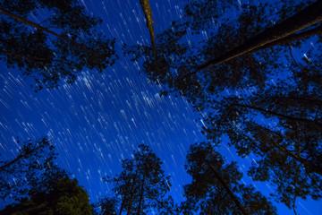 Foto op Canvas Kersenbloesem Starry night in forrest