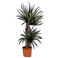 Home plant picture design
