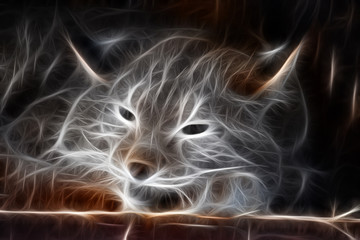 Fractal image of a wild sleeping lynx on a contrasting black background