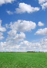 Wall Mural - Idyll, green field and blue sky with white clouds