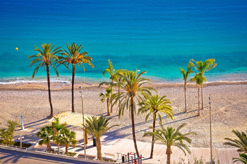Garden Poster Cyprus Palm and sand beach im Menton on French Riviera